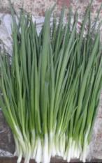 Зелена цибуля / перо цибулі